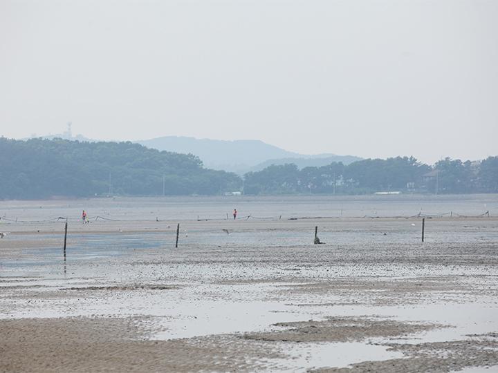 撮影時はちょうど引き潮で、干潟のような景色