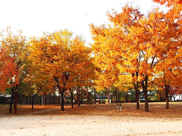 思い立ったらすぐそこでピクニック!なんてことが日常茶飯事。韓国には素敵な公園がたくさんあるので、普通にお店でご飯を食べるより断然おしゃれだと思います~♪