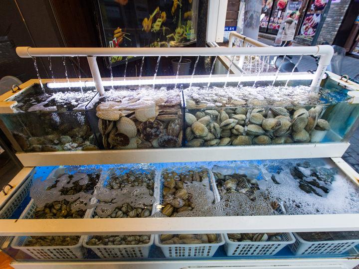 ズラリと並ぶ貝