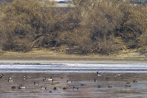 パムソム冬には渡り鳥が飛来することで有名
