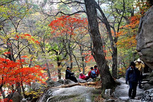 千仏洞渓谷沿いの紅葉は格別に美しい