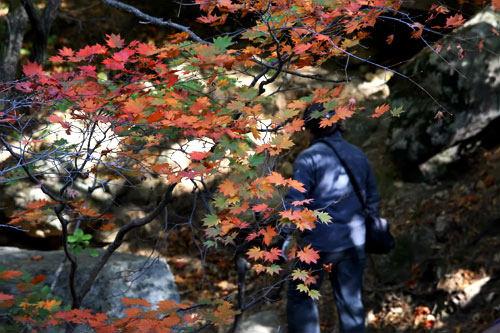 木洩れ日も紅葉に染まる