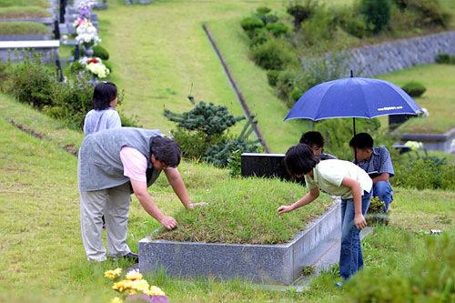 雑草を抜きお墓を覆う芝生を整備