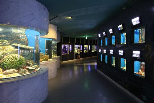 大小様々な水槽でのびのびする海の生物たち