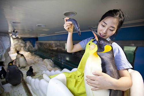 可愛らしいペンギンの餌付け