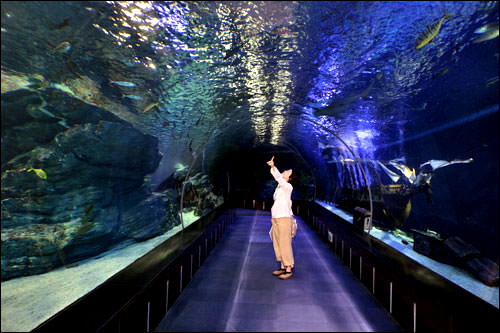 韓国最大規模の水族館SEA LIFE Busan Aquarium(シーライフ釜山アクアリウム)も人気