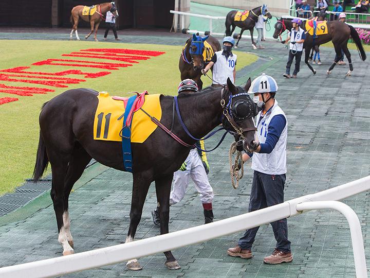 馬を間近で見られるパドック