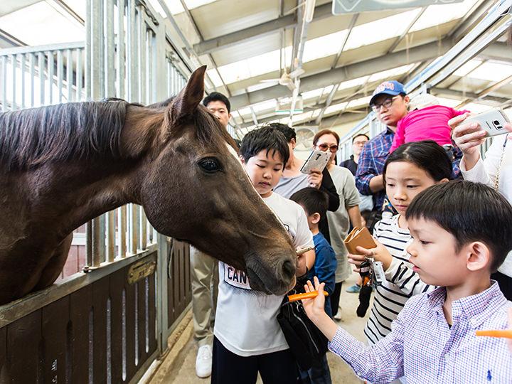 大小様々な馬が集まる馬小屋「ポニーハウス」で餌付けタイム