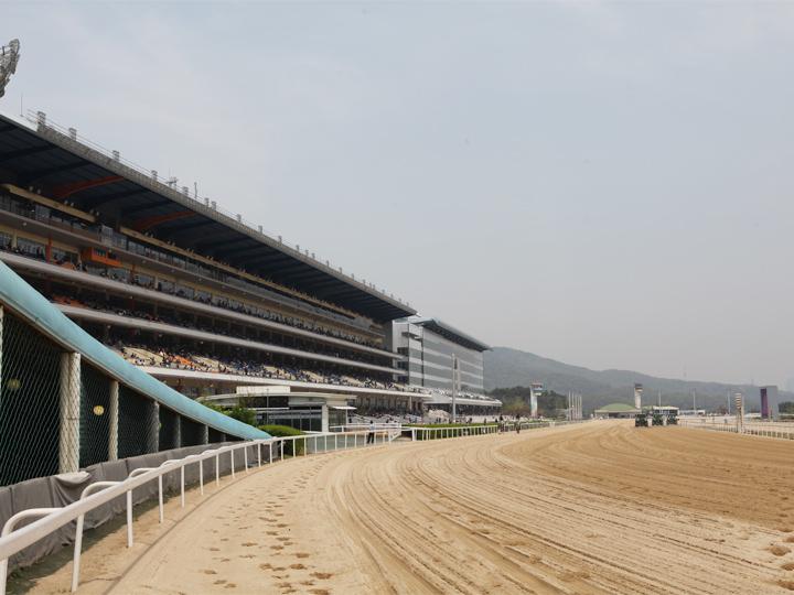 馬の調教場も兼ね、砂が敷かれている馬場
