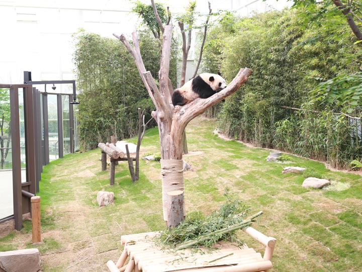 木登り中の「楽宝」