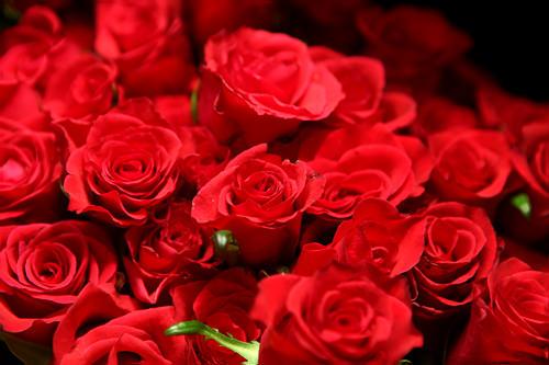 真っ赤なバラが人気