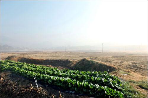 淳昌の霧発生日は年間70日以上にのぼる