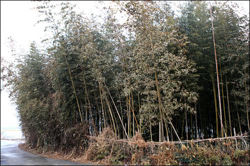 先祖代々の竹林で調達