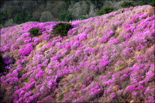 春の高麗山