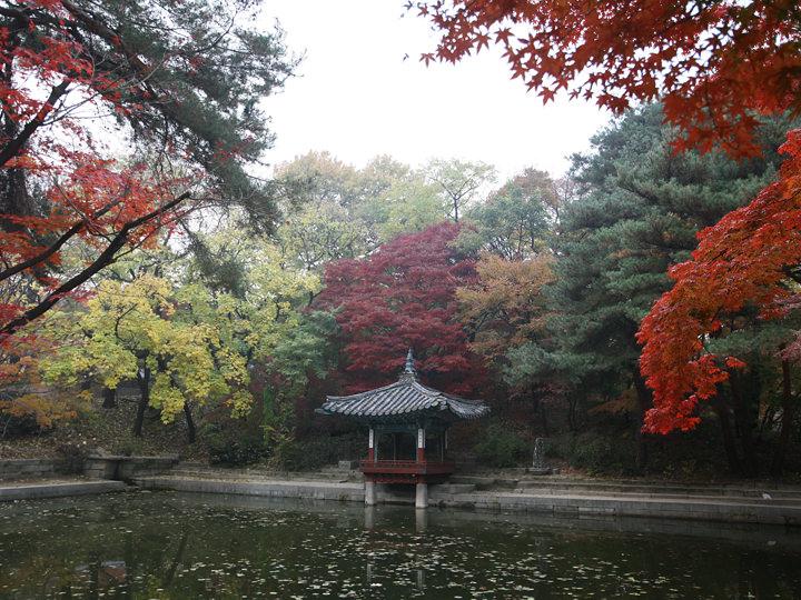 秋の愛蓮池