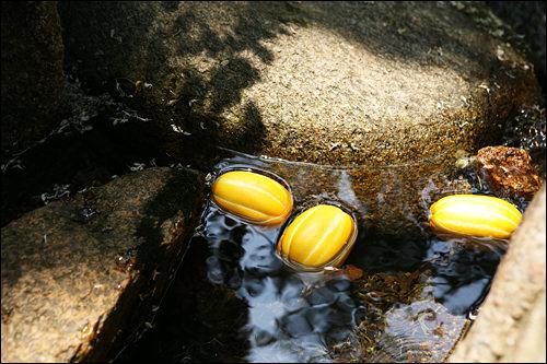 白砂室渓谷(地図赤6)ソウルの中の隠れた名所として知られる白砂室渓谷(ペッサシルケゴッ)。「生態・景観保全地域」に指定され、美しい自然が残っています。夏には水に足をつけて涼んでみるのもアリですよね。