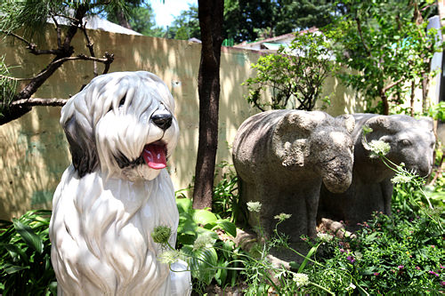 ハンソンの愛犬、モップちゃん