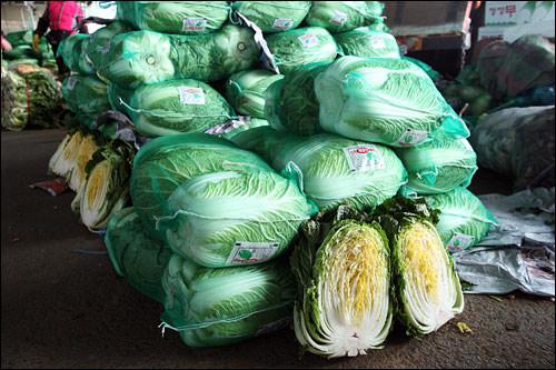 韓国の白菜は水気が少なく、シャキシャキとしっかりした歯ざわりが特徴。