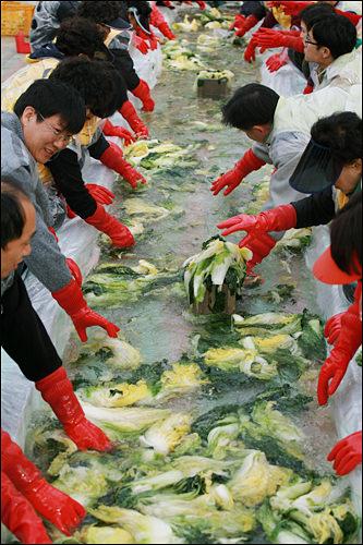 イベントでは大量の白菜をみんなで洗う。