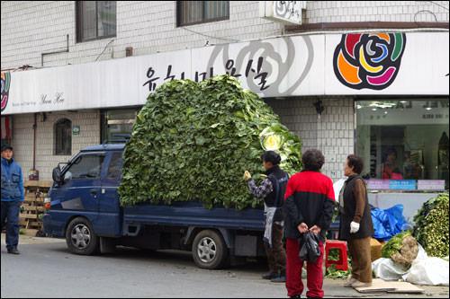 山のように白菜を積んでやってくるトラックは、毎年ながら圧巻の光景。