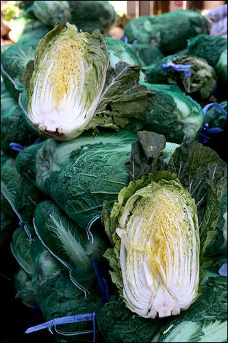 秋白菜は水分が少なく葉も肉厚でキムチ作りに適している。
