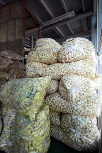 香味野菜のにんにくや生姜も出荷がピークに。