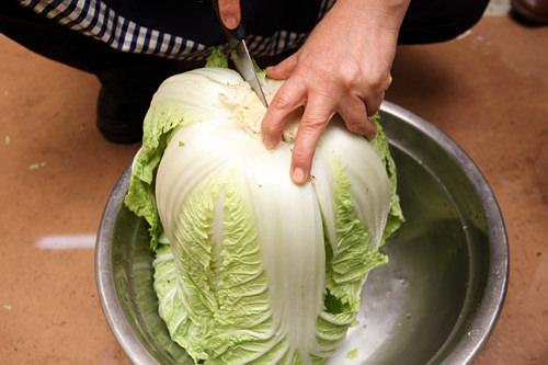 1.中央まで切り込みを入れ、手で裂くようにして2等分する。葉先まで包丁を入れないのは、先端の葉がバラバラになるのを防ぐため。
