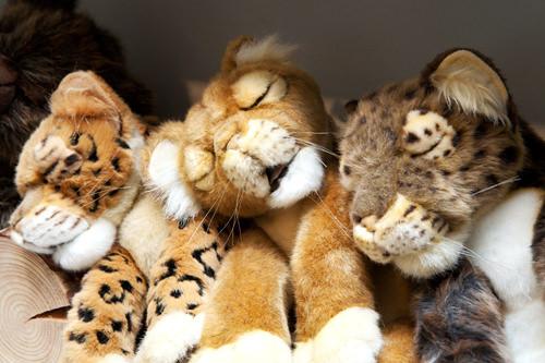 可愛い表情で寝ているライオン(真ん中)と豹(両脇) 各54,000ウォン