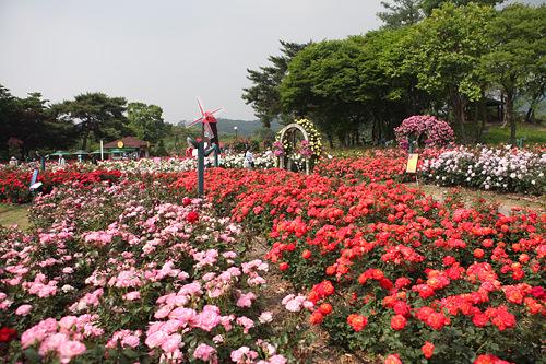 ソウル大公園動物園や美術館、植物園、遊園地ソウルランドなどが集まるソウル南部の巨大な公園。映画のロケやイベントもよく行なわれ、家族連れやカップルなどで賑わいます。地下鉄駅すぐで便利。