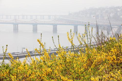 春色に染まる鷹峰山は絶好のフォトポイント