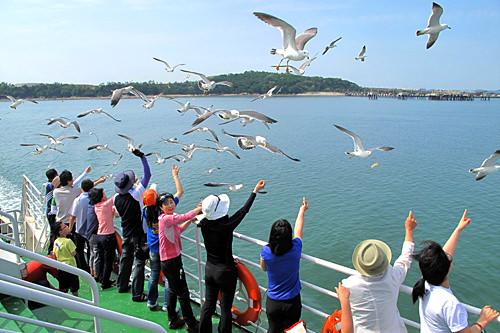 ウミネコとの戯れは仁川観光の楽しみのひとつ