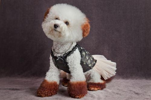 フォトゾーンで撮影。モデルは店の看板犬ココちゃん