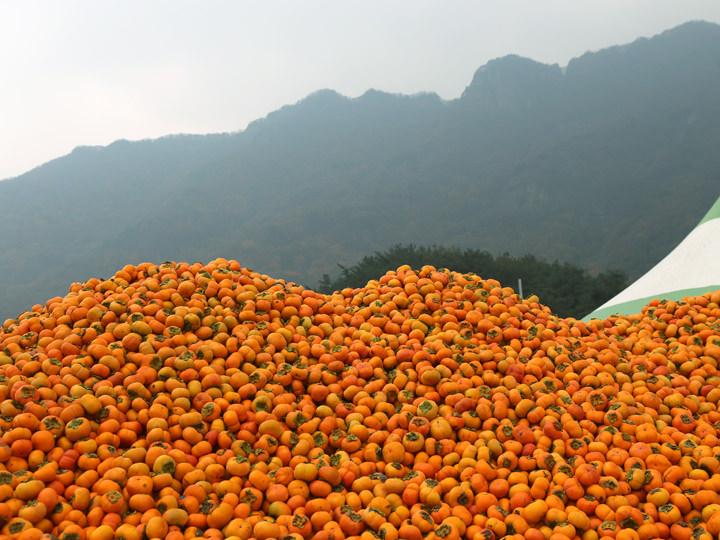 山積みの柿