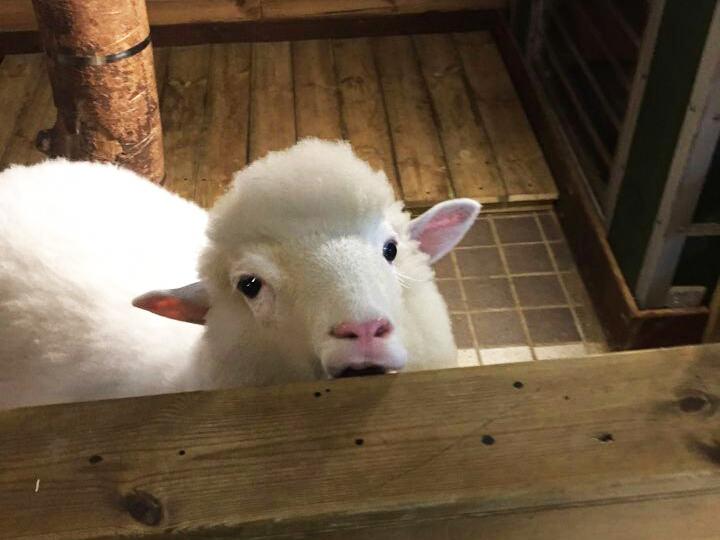 友達と弘大にある羊カフェ「Thanks Nature Cafe(サンクスネイチャーカフェ)」に行ってきました♪周辺には羊の他にも猫や犬カフェもあるので、みなさんも是非行ってみてください!